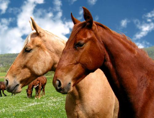 Equitazione – Passeggiate a cavallo